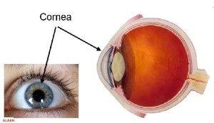 قرنیه (cornea)